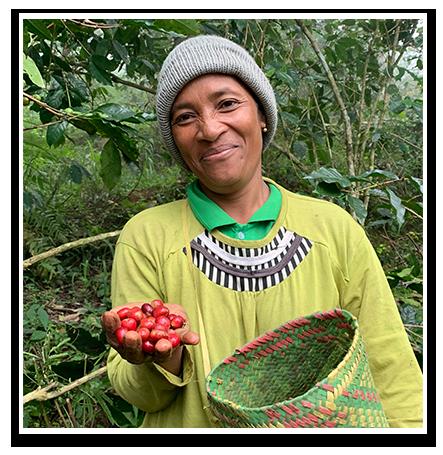 Flores-coffee-farmer