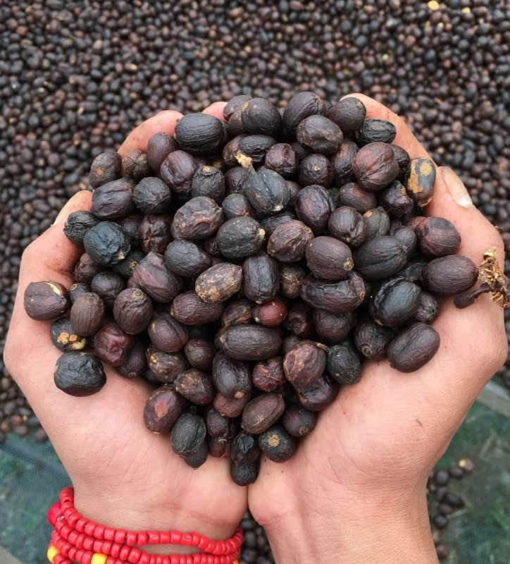 Tuang_Coffee_coffee_specialty_coffee_natural_red_honey_fullwashed_arabica_robusta_flores_manggarai